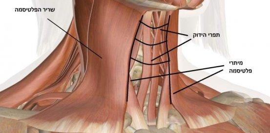 אילוסטרציה-מתיחת-צוואר